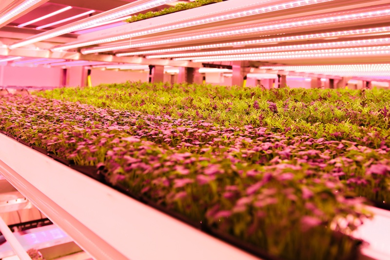 Vertical farm from Valoya
