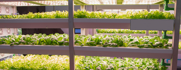 Vertical Farming products in racks